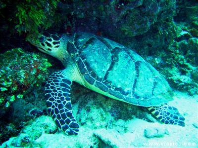 Photo Gallery Corn Islands The Coral Reef And Marine