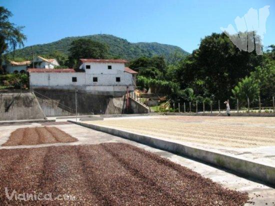 Mombacho Volcano Coffee Farm Tour Tours Nicaragua Vianica Com