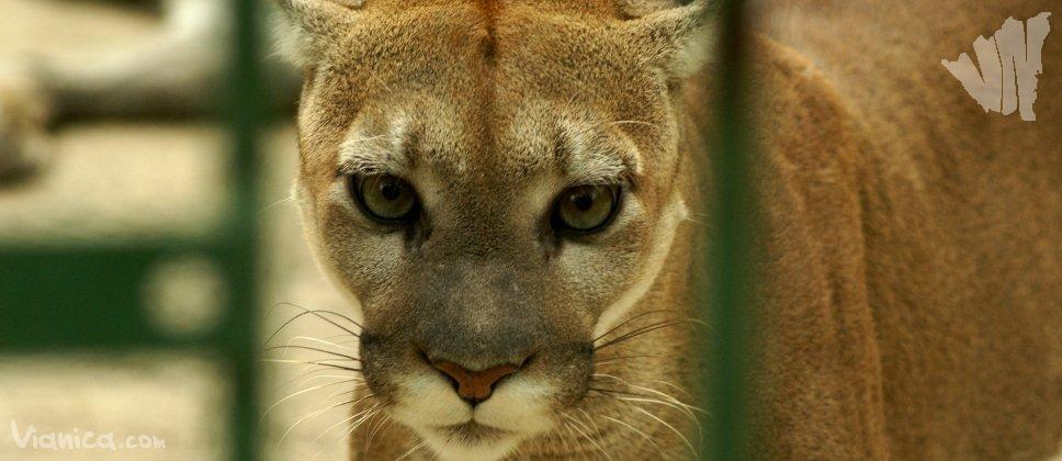 The National Zoo | Nic...