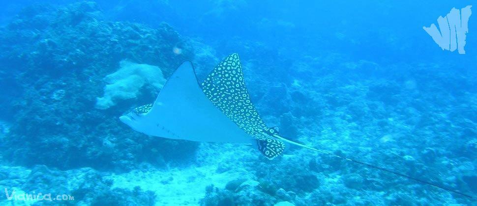 Caribbean Sea Animal Life: Reefs And Marine Life