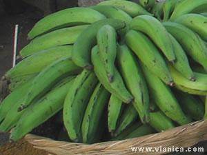Frutas De Nicaragua Nicaragua Vianicacom